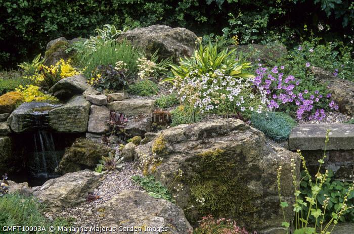 Alpine rock garden with saxifrage, erodium and hostas