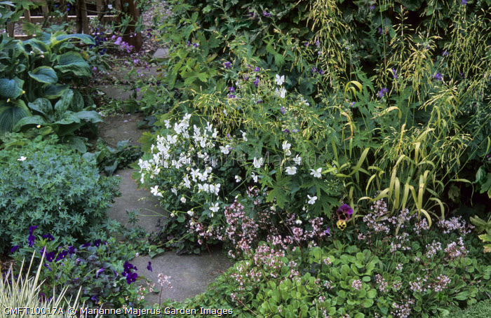 Milium effusum 'Aureum', viola, saxifrage, geranium, stepping stone path