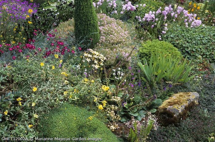 Aethionema, erodium, Ipheion sessile, dianthus in alpine rock garden