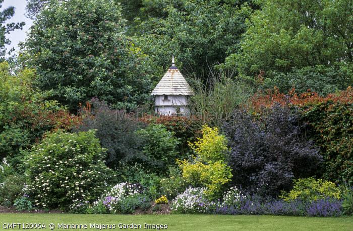 Shrub border with cotinus, Rosa glauca, viburnum, dovecote