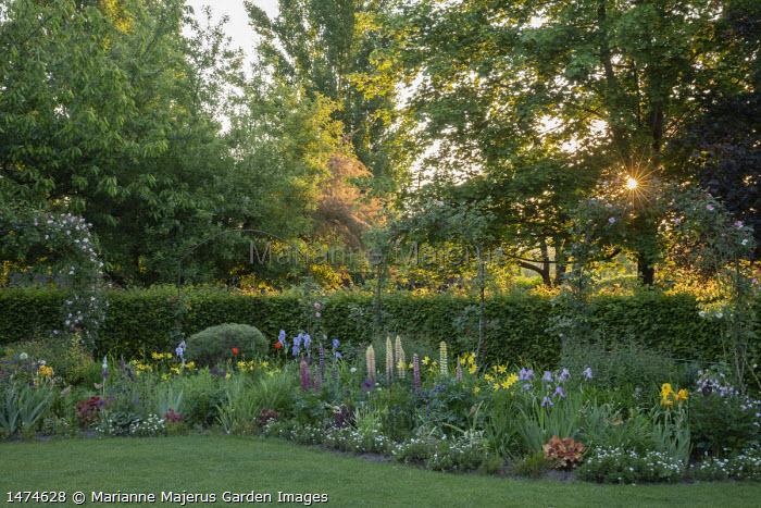Cottage garden border, lupins, irises, heuchera, hemerocallis