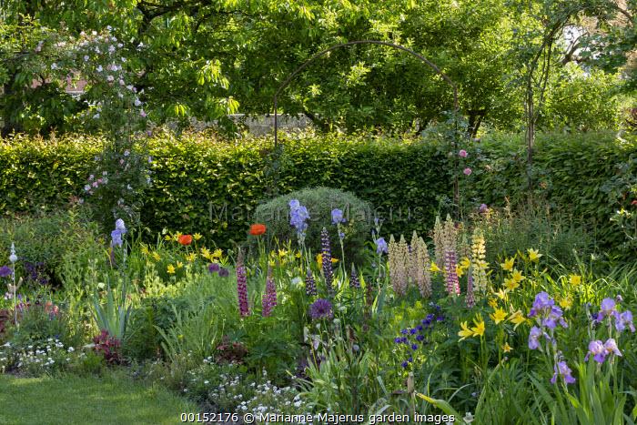 Roses climbing over archway, cottage garden border with hemerocallis, lupins, irises