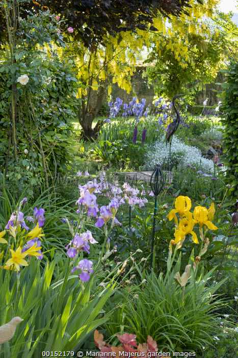 Irises in cottage garden border, heron ornament, laburnum