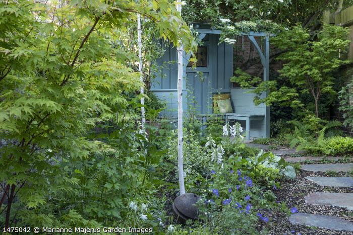 Stepping stones through shady garden leading to blue painted arbour, Betula utilis var. jacquemontii, Geranium 'Johnson's Blue', Acer palmatum 'Osakazuki', Digitalis purpurea 'Pam's Choice'