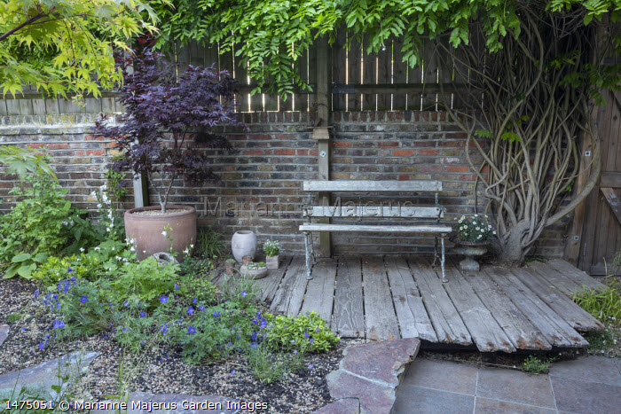 Bench on reclaimed wooden decking, brick wall, Acer palmatum 'Bloodgood' in terracotta container, wisteria, Geranium 'Johnson's Blue'