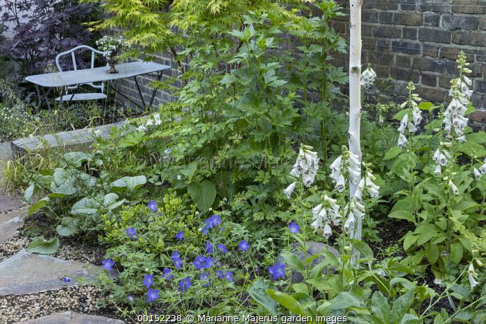Brunnera macrophylla 'Jack Frost', Acer palmatum 'Osakazuki', Digitalis purpurea 'Pam's Choice', Geranium 'Johnson's Blue', Milium effusum, table and chair on patio in shady corner