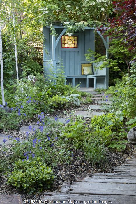 Stepping stone path through shady garden leading to blue painted arbour in corner, Betula utilis var. jacquemontii, Geranium 'Johnson's Blue', Sambucus nigra, reclaimed wooden decking