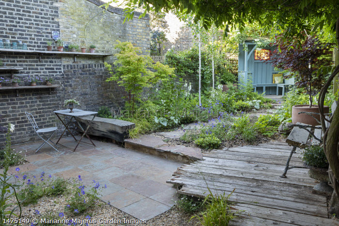 Stepping stones through shady garden leading to blue painted arbour, Betula utilis var. jacquemontii, Acer palmatum 'Osakazuki', Geranium 'Johnson's Blue', Acer palmatum 'Bloodgood' in pot, Digitalis purpurea 'Pam's Choice', bench on reclaimed timber decking, table and chairs on stone patio, display of pots on shelving