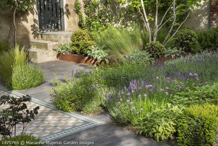 Herb border with Allium schoenoprasum, Lavandula angustifolia 'Hidcote Blue', Salvia officinalis, Cor-Ten steel border edging, Stachys byzantina, Stipa tenuissima