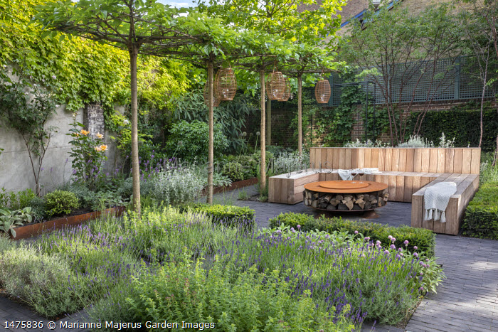 Lanterns hanging from row of umbrella-trained Morus nigra 'Fruitless' by built-in wooden seating area around Cor-Ten steel firepit with log storage, low Taxus baccata hedge, herb border with chives, Lavandula angustifolia 'Hidcote Blue', Rosmarinus officinalis 'Miss Jessopp's Upright', Teucrium fruticans, Prunus serrula