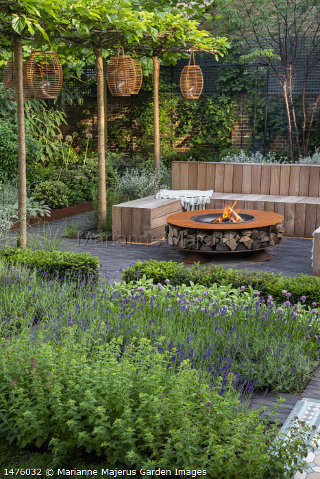 Lanterns hanging from row of umbrella-trained Morus nigra 'Fruitless' by built-in wooden seating area around Cor-Ten steel firepit with log storage, low Taxus baccata hedge, herb border with chives, Lavandula angustifolia 'Hidcote Blue', Teucrium fruticans, Prunus serrula