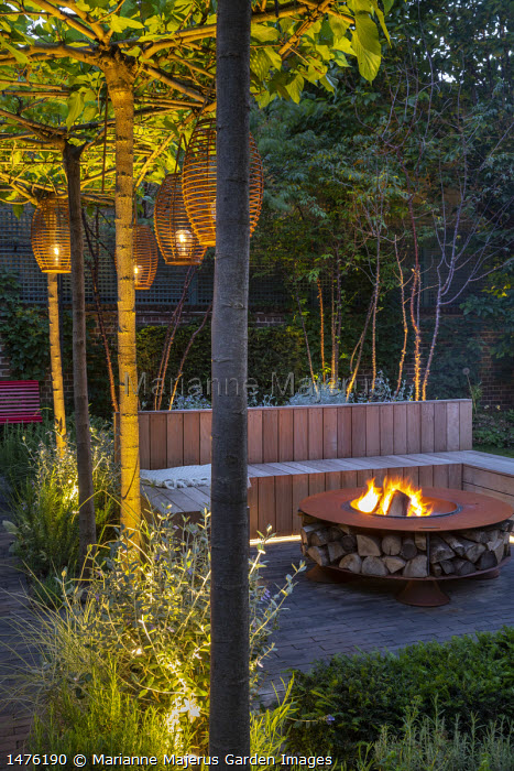 Lanterns hanging from row of umbrella-trained Morus nigra 'Fruitless' by built-in wooden seating area around Cor-Ten steel firepit, low Taxus baccata hedge, Prunus serrula,