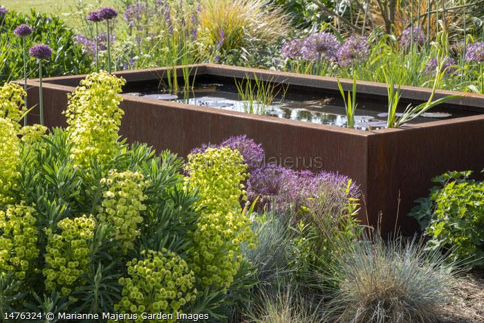 Rectangular Cor-Ten steel raised pond in border, Euphorbia characias subsp. wulfenii, Allium cristophii, Festuca glauca, Allium hollandicum 'Purple Sensation'