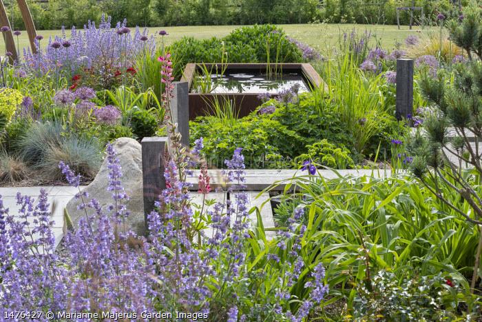 Timber boardwalk across border, Nepeta racemosa 'Walker's Low', Allium hollandicum 'Purple Sensation', Allium cristophii, raised Cor-Ten steel pond, Geranium 'Rozanne'