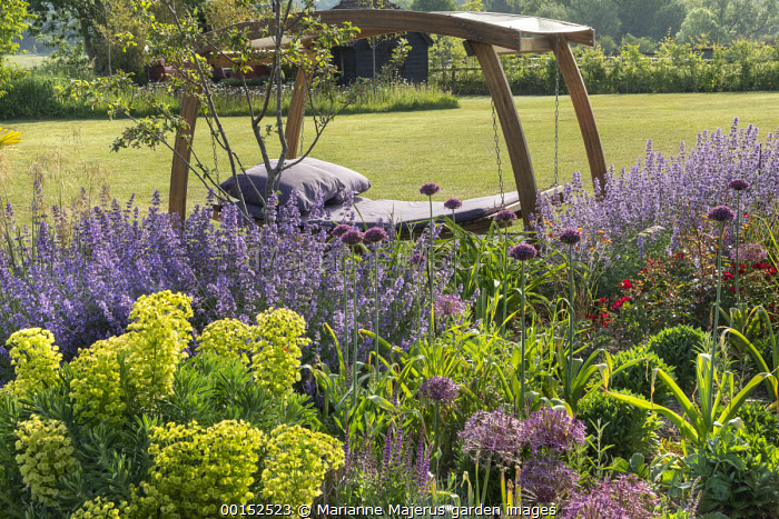 Timber-framed swinging daybed with purple cushions, Nepeta racemosa 'Walker's Low', Allium hollandicum 'Purple Sensation', Euphorbia characias subsp. wulfenii
