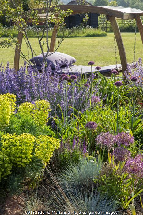 Timber-framed swinging daybed with purple cushions, Nepeta racemosa 'Walker's Low', Allium hollandicum 'Purple Sensation', Euphorbia characias subsp. wulfenii, Festuca glauca