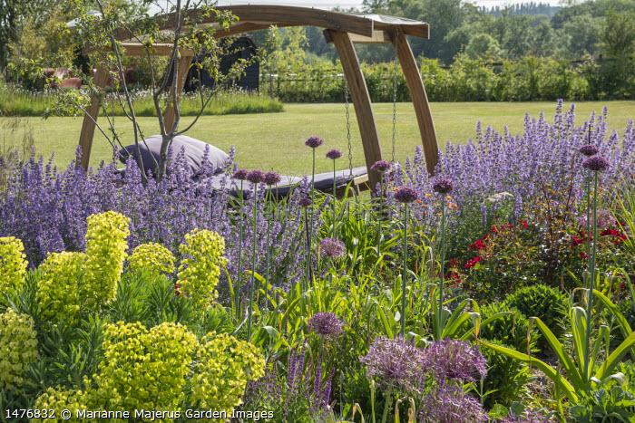 Timber-framed swinging daybed with purple cushions, Nepeta racemosa 'Walker's Low', Allium hollandicum 'Purple Sensation', Euphorbia characias subsp. wulfenii