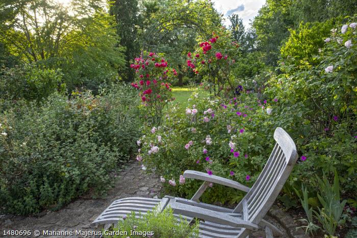 Wooden recliner chair, Rosa 'Rousefrënn', Geranium psilostemon, Rosa 'Aline Mayrisch' climbing on archway