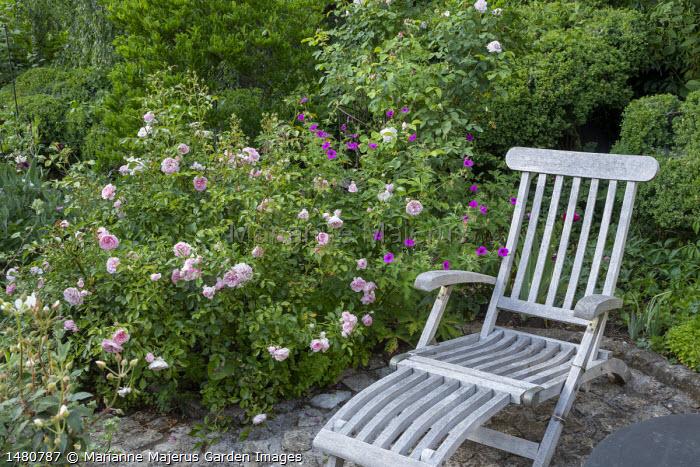 Wooden recliner chair, Rosa 'Rousefrënn', Geranium psilostemon