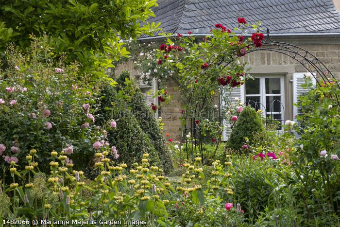 Rosa 'Sympathie' climbing on archway, Phlomis russeliana, Salvia nemorosa 'Caradonna', clipped Buxus sempervirens pyramids