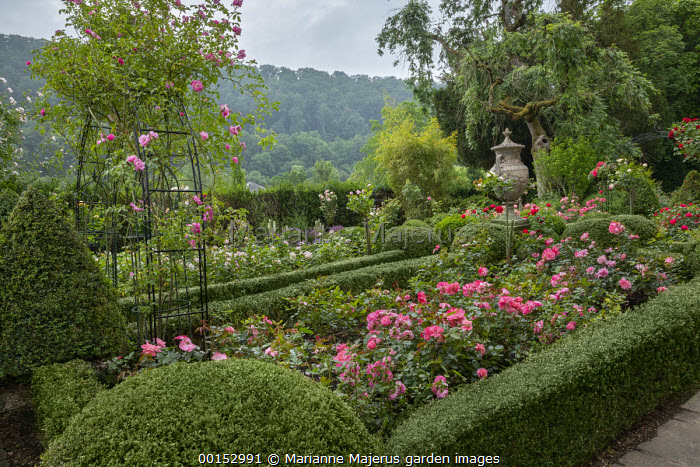 Roses in clipped Buxus sempervirens parterre and climbing over archway, box topiary, classical stone urn