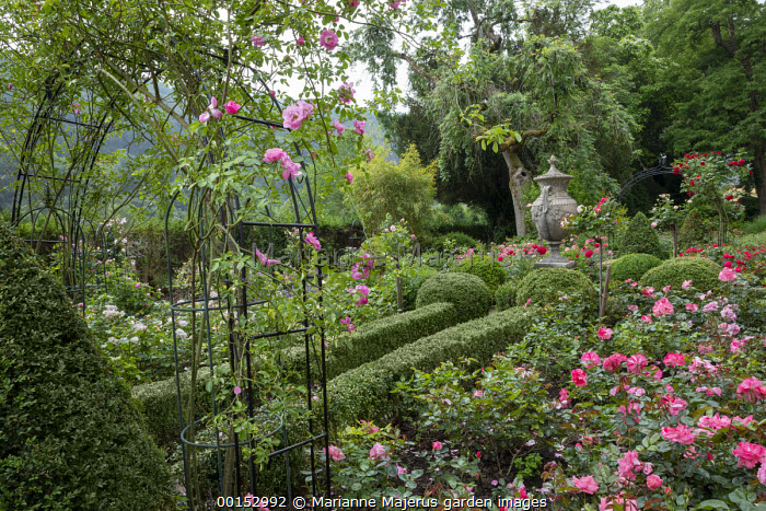 Roses in clipped Buxus sempervirens parterre and climbing over archway, box topiary, classical stone urn,  Rosa 'Trier 2000', Rosa 'Johann Strauss' (Meilland, 1994) Rosa 'Sympathie'