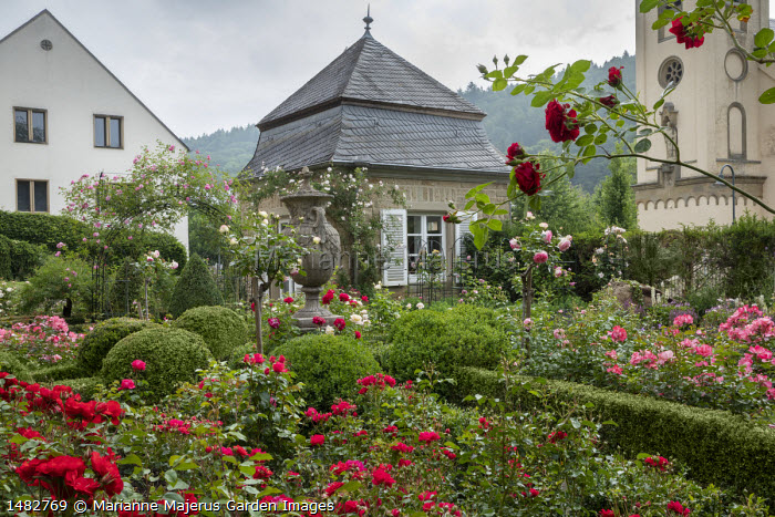 Rose garden, Rosa 'Chorus', classical urn, clipped box topiary and hedges