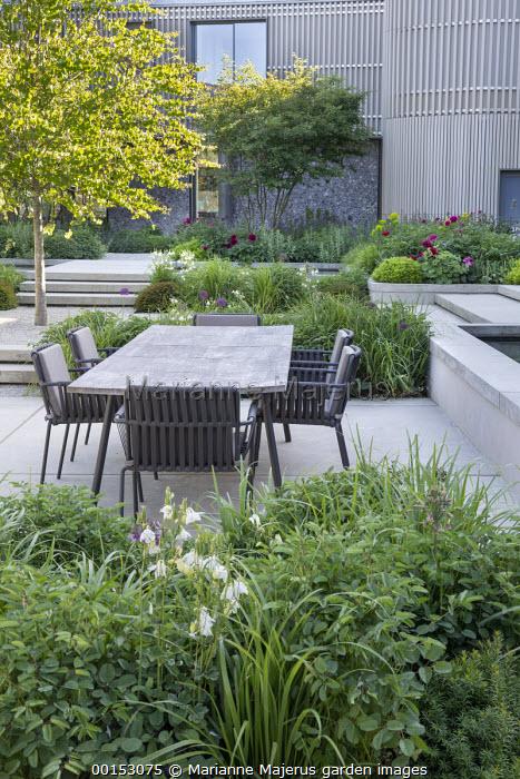 Table and chairs on concrete terrace, Aquilegia vulgaris 'Alba', Pittosporum tobira 'Nanum', Alchemilla mollis, Paeonia lactiflora 'Karl Rosenfield', Cercidiphyllum japonicum