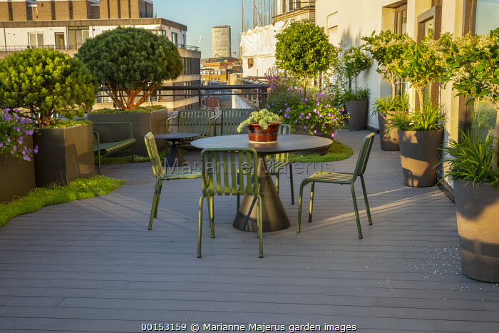 Contemporary table and chairs on roof terrace, row of pots with Ligustrum japonicum 'Texanum' standards underplanted with Liriope muscari 'Moneymaker', Pinus sylvestris 'Watereri' in large planters, Geranium 'Rozanne'