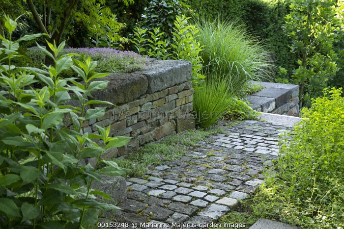 Stone sett paving, thyme in cracks, stone raised bed