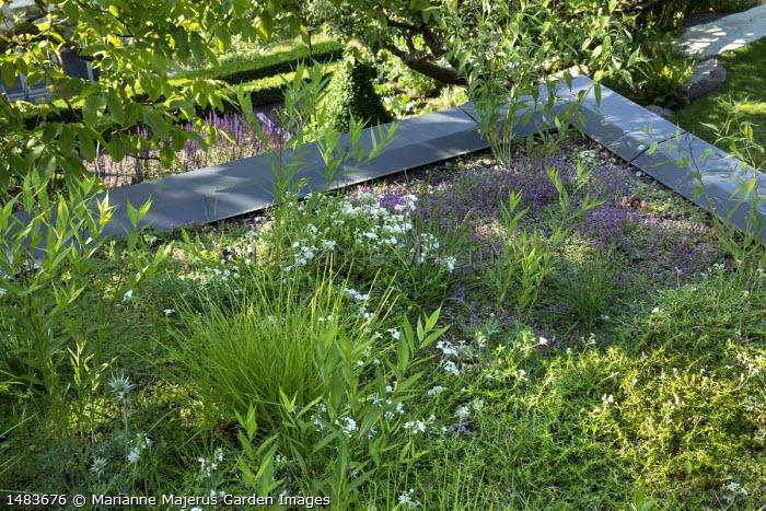 Living green roof, Sesleria autumnalis, Phlox subulata 'Maischnee', Thymus 'Bressingham'