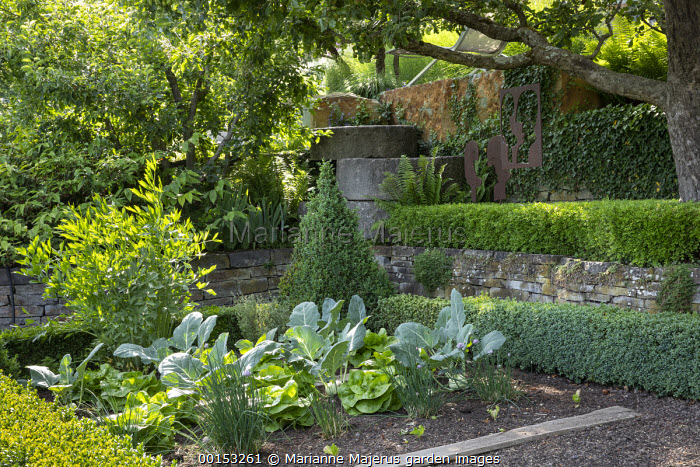 Kohlrabi, chives, lettuce and lovage in box-edged kitchen garden