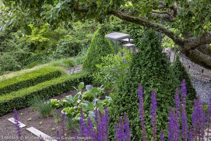Salvia nemorosa 'Ostfriesland', box pyramids, low clipped box hedges, kitchen garden