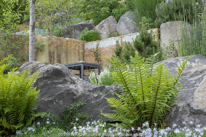 Dryopteris affinis by large rocks, table on terrace, Pinus sylvestris, campanula, Salvia nemorosa 'Adrian'