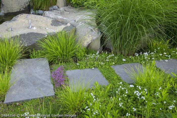 Stepping stone path across living green roof, Sesleria autumnalis, Phlox subulata 'Maischnee', Thymus 'Bressingham', Miscanthus sinensis 'Gracillimus'