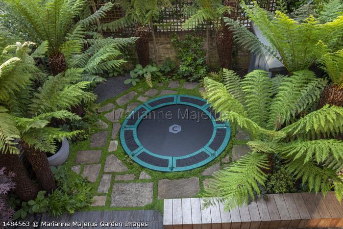 Sunken trampoline in urban courtyard garden, painted shed, stone paving, Dicksonia antarctica