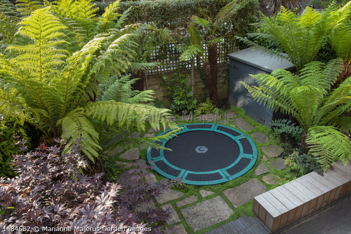 Sunken trampoline in urban courtyard garden, painted shed, stone paving, Dicksonia antarctica, Acer palmatum in container