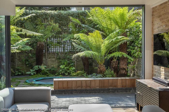 View from inside to sunken trampoline in urban courtyard garden outside, Dicksonia antarctica