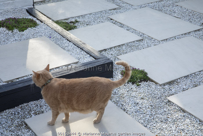 Cat on stone paving slab and gravel terrace