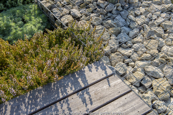 Stone gabions, wooden bench, thyme
