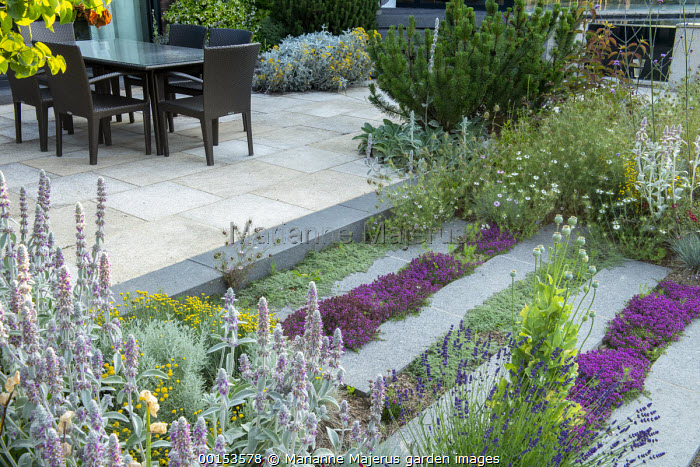 Thyme in stone paving cracks, Stachys byzantina, nigella, lavender, poppy seedheads, table and chairs on stone patio