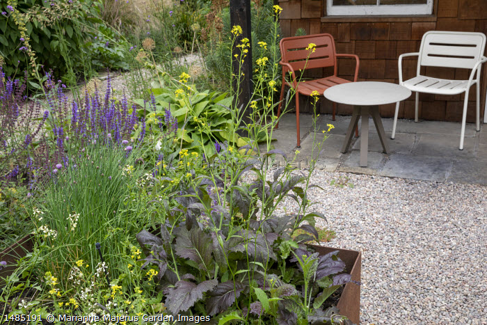 Metal chairs on stone patio under verandah, gravel path, herbs in raised bed, salvia