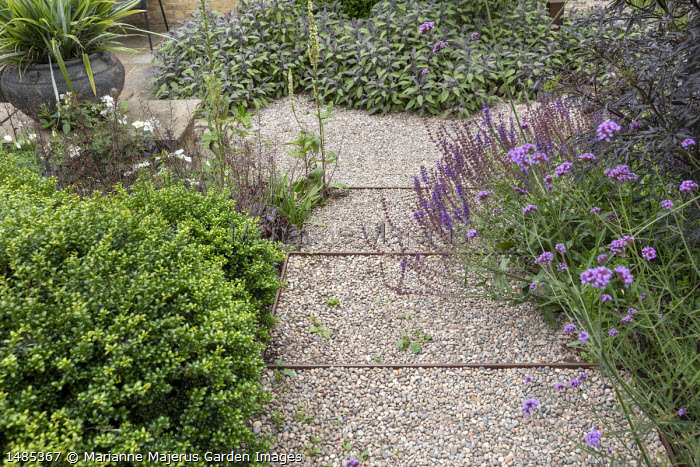 Gravel path, Verbena bonariensis, Salvia nemorosa 'Caradonna', Sambucus nigra f. porphyrophylla 'Black Lace' syn. Eva', Salvia officinalis 'Purpurascens'