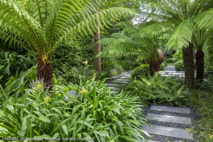 Stepping stone path through exotic garden border, Agapanthus umbellatus 'Ovatus', Dicksonia antarctica