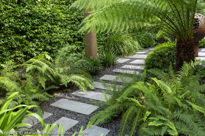 Stepping stone path through exotic garden border, Dicksonia antarctica