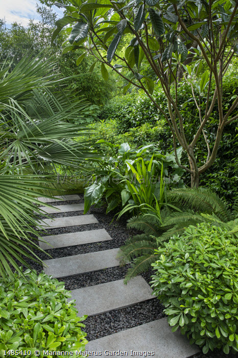 Stepping stone path through exotic garden border, Trachycarpus fortunei, Eriobotrya japonica, Pittosporum tobira 'Nanum'