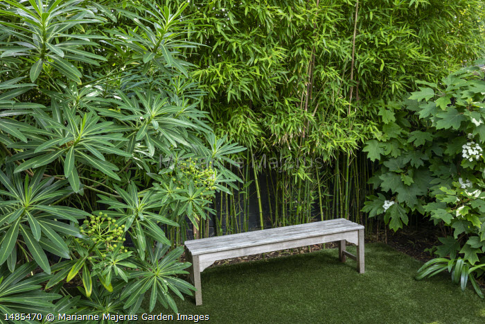 Wooden bench on astroturf lawn, Euphorbia mellifera, Hydrangea quercifolia, Phyllostachys aurea screen