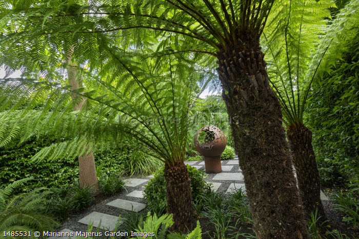 View through Dicksonia antarctica to mild steel sphere firepit on exotic garden patio, stone paving slabs and gravel