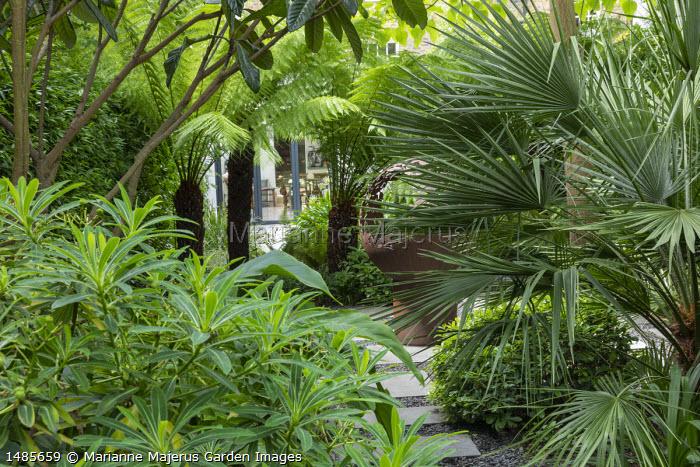Stepping stone path through exotic garden border, Trachycarpus fortunei, Eriobotrya japonica, Pittosporum tobira 'Nanum', euphorbia, Dicksonia antarctica