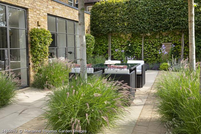 Rattan furniture with cushions on stone and brick patio, Pennisetum orientale 'Karley Rose', pleached hornbeam hedge, Trachelospermum jasminoides climbing on fence